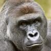 Profile picture of Gage Compton
