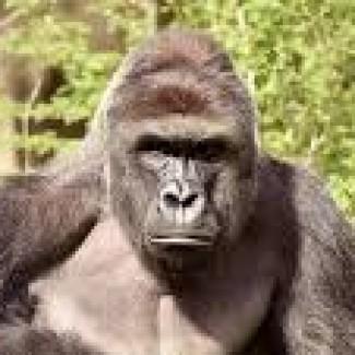 Profile picture of Paul Stapleton