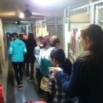 middle-grade-stars-team-members-visit-a-no-kill-animal-shelter